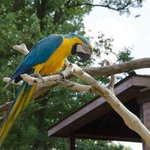Parrot or Macaw?