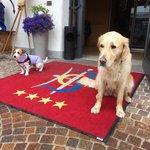 LO STAFF D'Animazione canino!!!!! ECO  e  DICKY ����