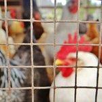Farm animals, chickens, goats, donkeys, sheep, etc!