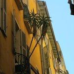 palmier sur un balcon