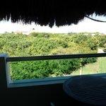 Garden view (mini jungle, lots of animals)