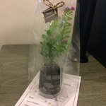 Lovely mini tree gift from Cher hotel from turn down service ( In Thai , Cher = tree )