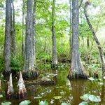 Au sein de la mangrove en airboat