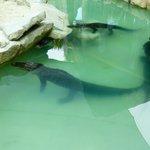 alligators du parc