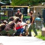 Maîtrise d'un alligator par les employés du parc