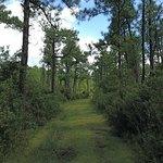 Green Grassy Pathway Hontoon Island