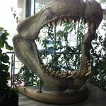 bocca di squalo all ingresso