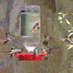 Hummingbirds at Ramsey Canyon Inn
