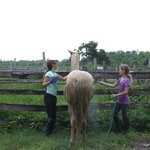girls washing horses down after the ride
