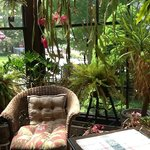 The lovely sun room