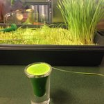 Fresh squeezed WHEATGRASS! they grow their own!  $2. A shot of instant enzyme energized nutrient