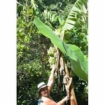 banana trees on our hike!
