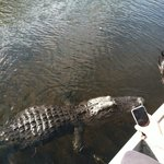 Gator tried to climb in