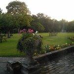 Back lawn/beer garden.