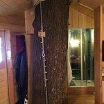 tree trunk inside