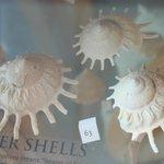 Some nice shells on display.