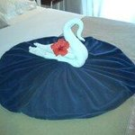 Beautiful swan on lake by Ackbar!