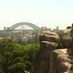 View of some mountain goats and the Harbour Bridge from Taronga Zoo