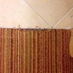 Carpet wear between bathroom and bedroom area.