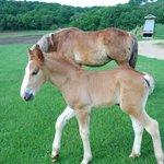 New baby horse...Dot