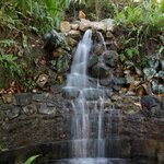 A waterfall in the garden