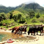 Pool that doubles up as watering hole for animals - Co-existence!
