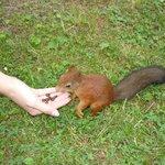 белочки едят с рук в парке на Елагином острове