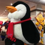 No photo for penguins in penguin parade. All i can take is a photo of a stuffed toy penguin.