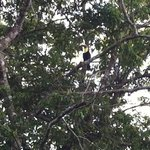 Toucans could be seen from our back patio.