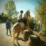 Horta da Moura e seus cavalos
