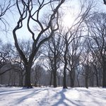 The amazing Central park in winter