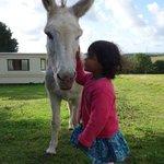 Paddy the donkey