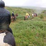 Paseo en caballos islandeses