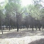 Pine groves that surround the hotel