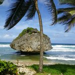 Bathsheba Beach Formations.
