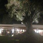 le fameux olivier millénnaire