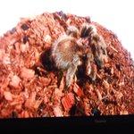 Spider, an extra exhibit