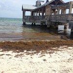 Une mer d'algues...toute la journée...personne qui nettoie!