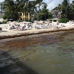 ...belle plage si elle était soignée!