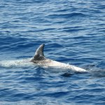 Tiran Island Boat Trip and Dolphins
