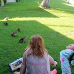 We loved our morning duckling visitors.