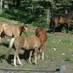 Foto de Cross Zee Ranch