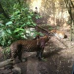 Leopard canyon