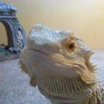 Reptiles, gators, tortoise, and fishies!