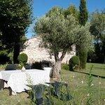 Petit déjeuner près de l'olivier