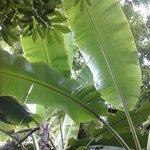 Guilin Botanical Garden Foto