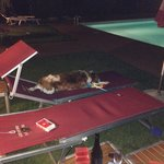 A bordo piscina la sera dopo cena, una favola!!