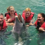 Dolphins.....very good value for money