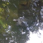 a turtle and reflections