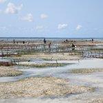 coltivazione di alghe davanti resort